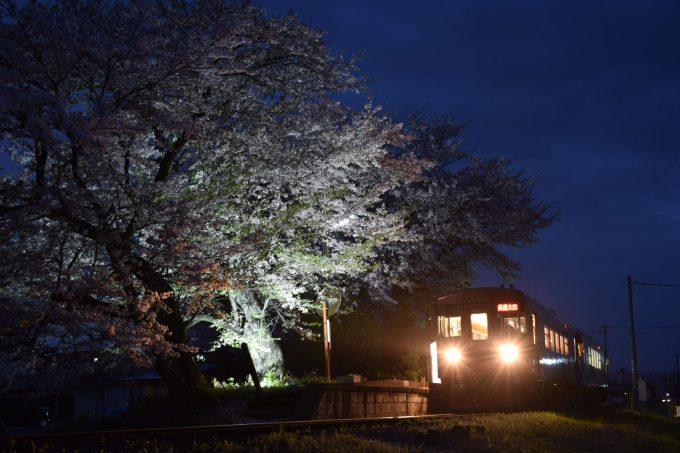 No.567 夕刻の夜桜